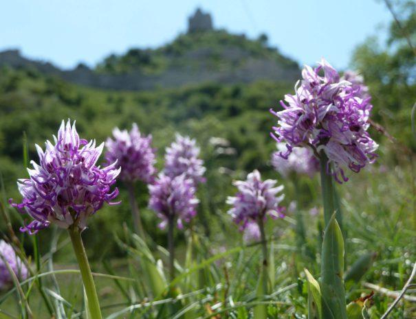 patrimoine naturel chateau de crussol